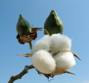 ICE Cotton Futures & Options Trading