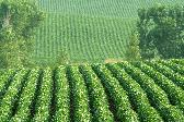 Soybean commodity options trading broker online